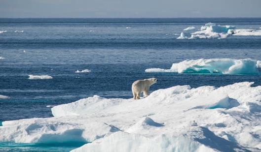 [200622] 북극 빙하58 (1).jpg